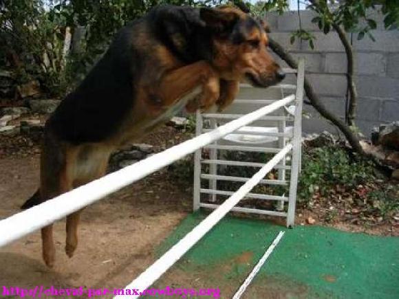 20 objets qui peuvent amliorer la vie de votre chien et