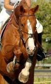 http://cheval-par-max.cowblog.fr/images/3/4010765.jpg