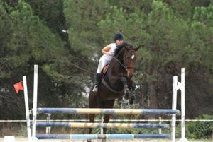 http://cheval-par-max.cowblog.fr/images/5/4541340.jpg