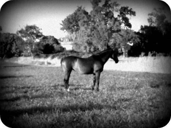 http://cheval-par-max.cowblog.fr/images/6/IMG6960.jpg