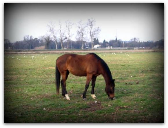 http://cheval-par-max.cowblog.fr/images/6/IMG7264.jpg