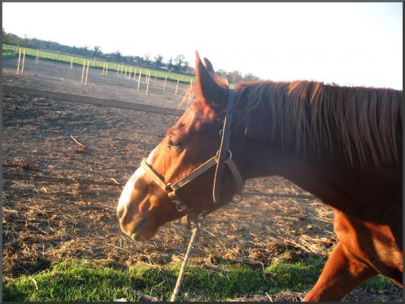 http://cheval-par-max.cowblog.fr/images/6/charlot11.jpg