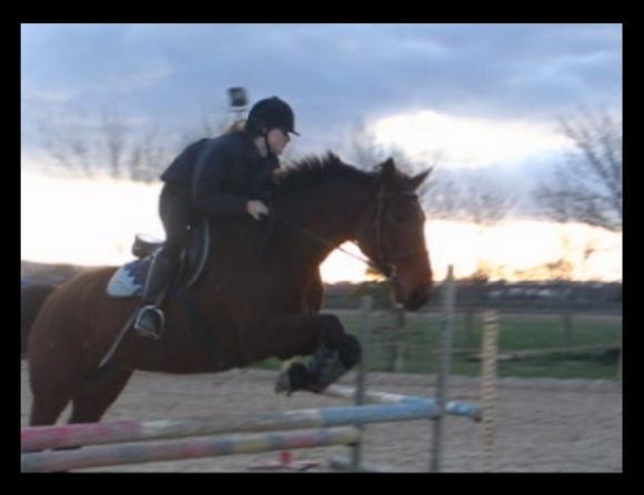 http://cheval-par-max.cowblog.fr/images/6/fairplaylolotte.jpg