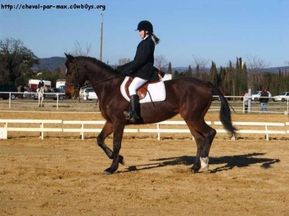 http://cheval-par-max.cowblog.fr/images/6/fiesta12.jpg