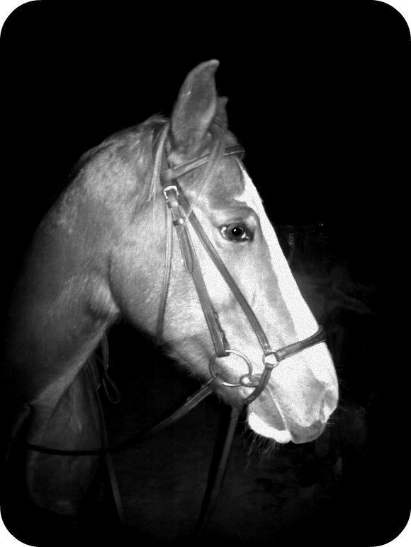 http://cheval-par-max.cowblog.fr/images/6/gazelle02.jpg