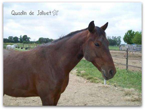 http://cheval-par-max.cowblog.fr/images/7/1000337.jpg