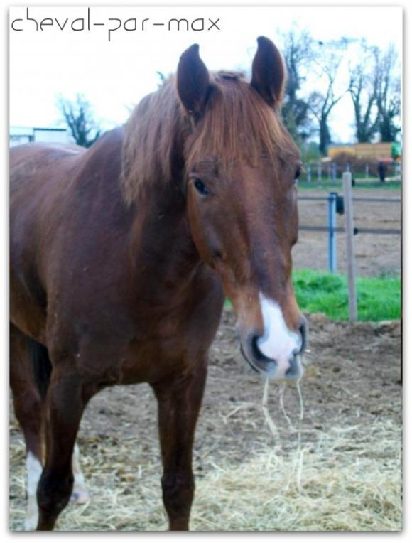http://cheval-par-max.cowblog.fr/images/7/1002175.jpg