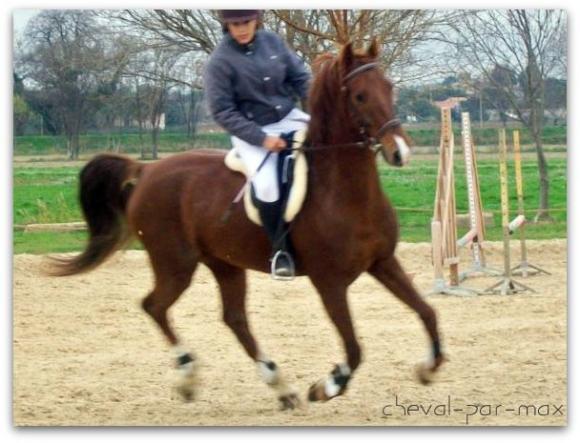 http://cheval-par-max.cowblog.fr/images/7/100E2286.jpg