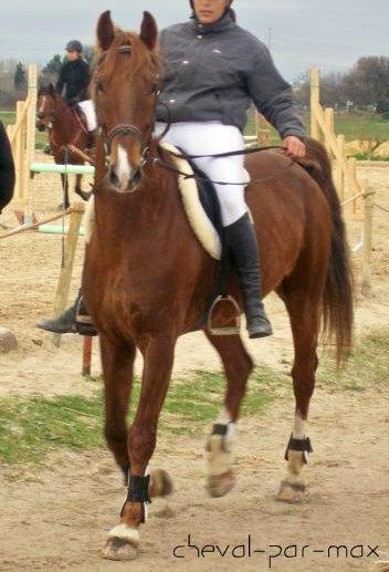 http://cheval-par-max.cowblog.fr/images/7/100E2287.jpg