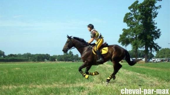 http://cheval-par-max.cowblog.fr/images/7/479311572129386241476756701303876156039951n.jpg