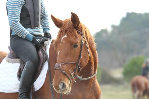 http://cheval-par-max.cowblog.fr/images/7/914165495448877189250131054833o.jpg