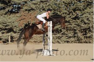 http://cheval-par-max.cowblog.fr/images/7/CapturePhotoMozillaFirefox1.png