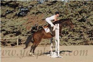 http://cheval-par-max.cowblog.fr/images/7/CapturePhotoMozillaFirefox10.png