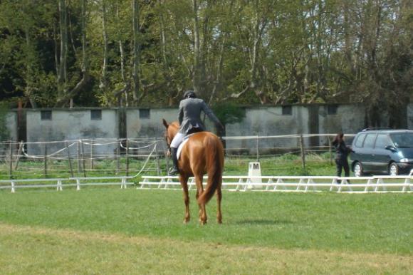 http://cheval-par-max.cowblog.fr/images/7/Idole01.jpg