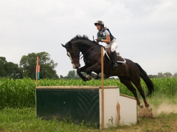 http://cheval-par-max.cowblog.fr/images/7/aeffacer06.jpg