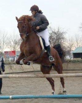 http://cheval-par-max.cowblog.fr/images/7/veerman03.jpg