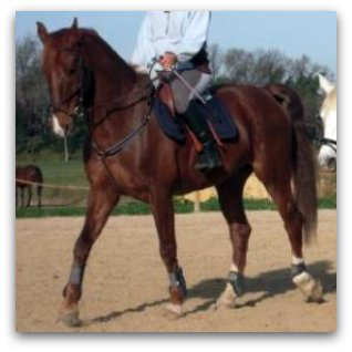 http://cheval-par-max.cowblog.fr/images/7/veerman08.jpg