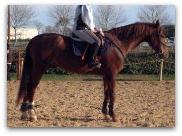 http://cheval-par-max.cowblog.fr/images/7/veerman12.jpg