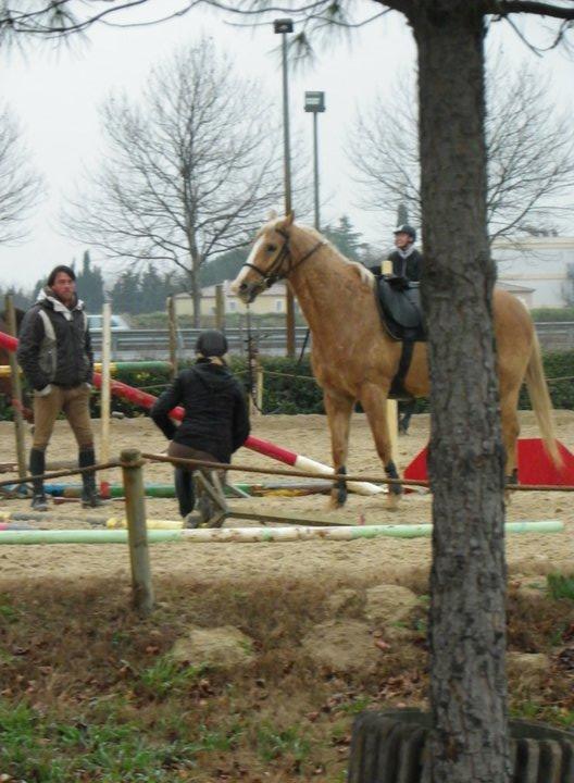http://cheval-par-max.cowblog.fr/images/8/1672701335677267107021000017242686652124428366284n.jpg