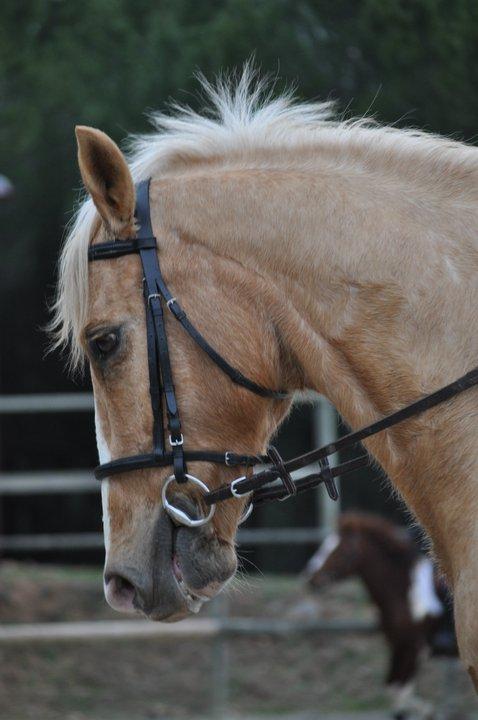 http://cheval-par-max.cowblog.fr/images/8/1681821840815749455941000003125850205103064980682n.jpg