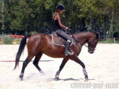 http://cheval-par-max.cowblog.fr/images/8/16957128266159633815240381767069894281645n.jpg