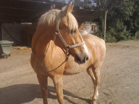 http://cheval-par-max.cowblog.fr/images/8/2283851249693409174061000021302108612021102723691n.jpg