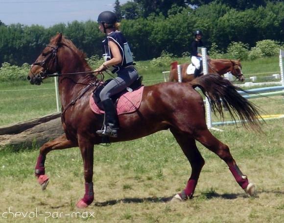 http://cheval-par-max.cowblog.fr/images/8/2984039676636960382474460339328605612344n.jpg