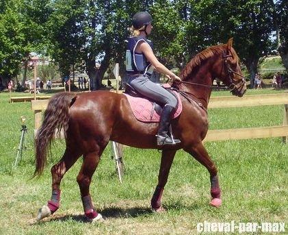 http://cheval-par-max.cowblog.fr/images/8/2984039677406960382474460339331118104133n.jpg