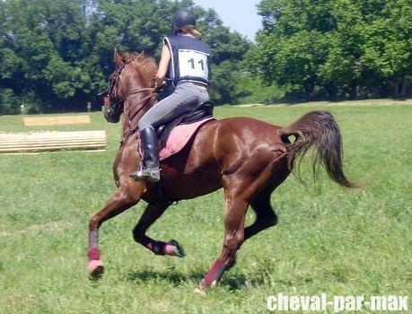http://cheval-par-max.cowblog.fr/images/8/2984039677476960382474460339331234515364n.jpg