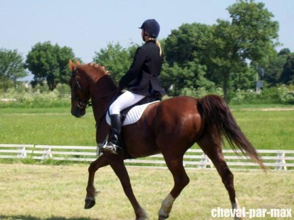 http://cheval-par-max.cowblog.fr/images/8/2988814710949054771476756701312029617704177n.jpg