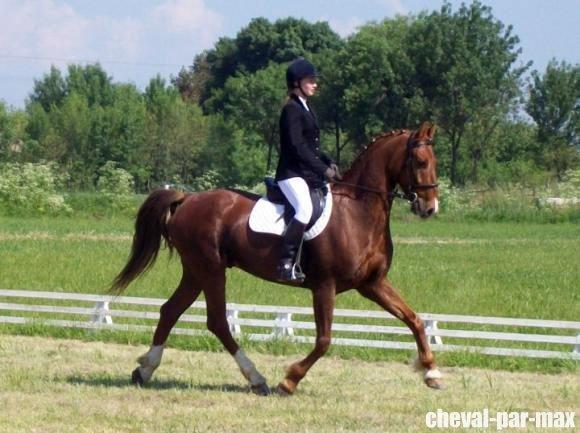 http://cheval-par-max.cowblog.fr/images/8/2988814710954654911476756701312029718031078n.jpg
