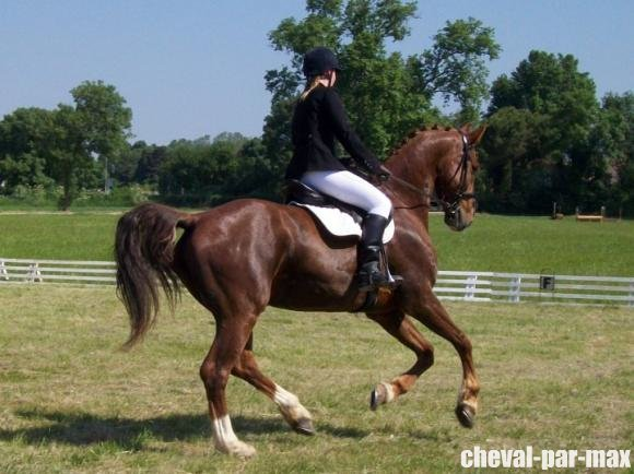 http://cheval-par-max.cowblog.fr/images/8/2988814710964655161476756701312029917637213n.jpg