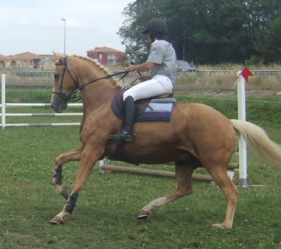 http://cheval-par-max.cowblog.fr/images/8/Louxor01.jpg