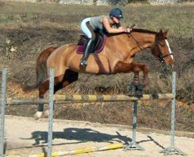 http://cheval-par-max.cowblog.fr/images/8/hansie01.jpg