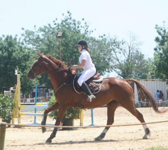 http://cheval-par-max.cowblog.fr/images/8/hansie03.jpg
