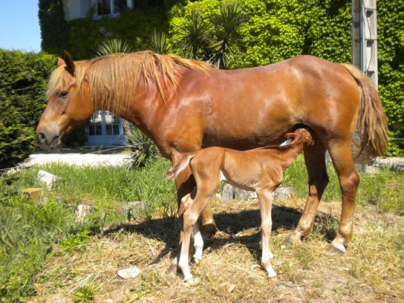 http://cheval-par-max.cowblog.fr/images/8/poulain01.jpg
