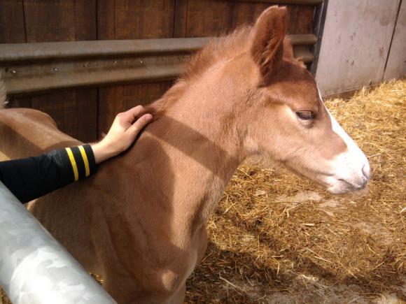http://cheval-par-max.cowblog.fr/images/8/poulain03.jpg