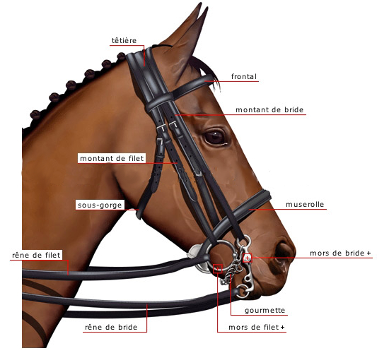 http://cheval-par-max.cowblog.fr/images/articles/aeffacer06.jpg