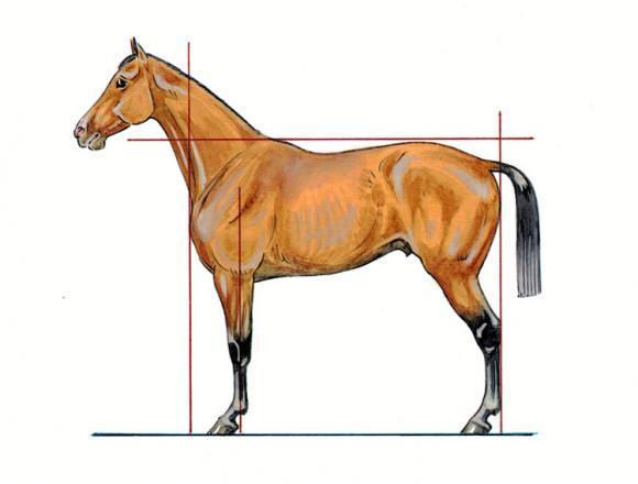 http://cheval-par-max.cowblog.fr/images/articles/aplombprofil.jpg