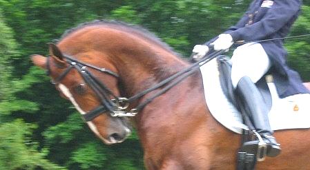 http://cheval-par-max.cowblog.fr/images/articles/rollkur.jpg